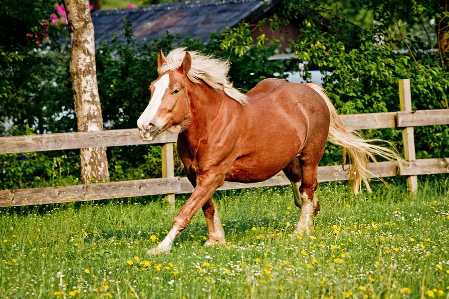 pferdefotografie paderborn 2