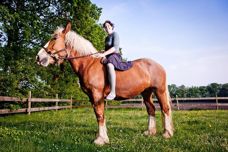 pferdefotografie schloß neuhaus
