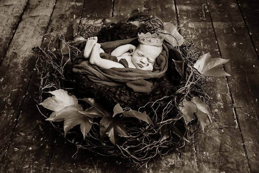Baby Studio Fotografie